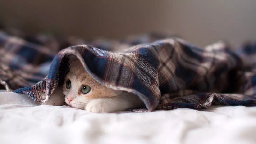 给新手挑选猫咪的13条建议