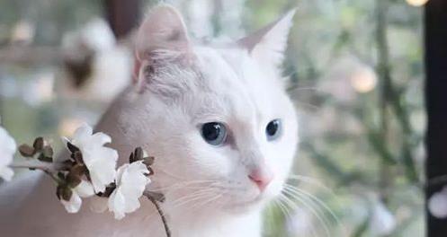 普贝斯:猫咪走丢了怎么办
