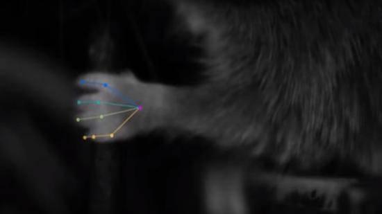 神经科学家用深度学习跟踪和标记动物身体部位