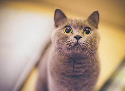 猫在哪里买最便宜图片