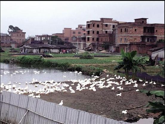 广州市区河涌边开饭店或将面临三至五万罚款