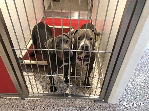 遭遇遗弃 两只狗狗挤在一张小床 安抚对方
