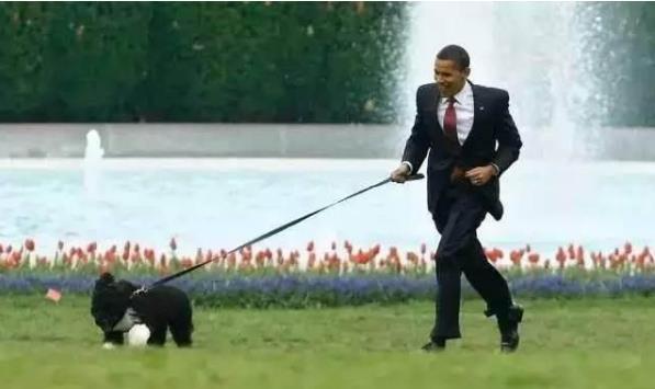 普贝斯:皇家狗子的风采如何