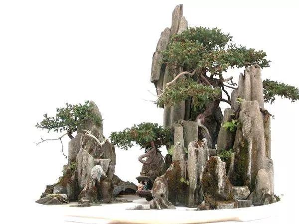 山水盆景的花木须与山石融为一体.图片