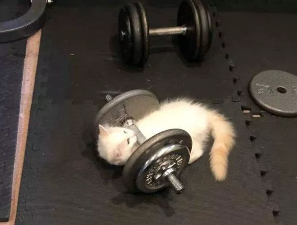 猫一秀肌肉,人类都要靠边站