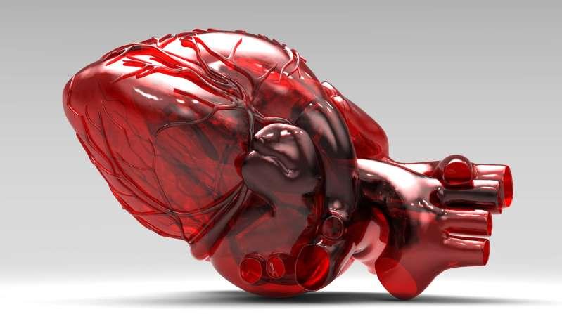美国科学家宣布3D心脏印刷的突破