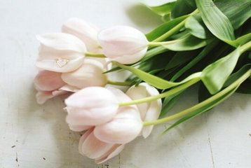 孕妇适合养哪些花草?