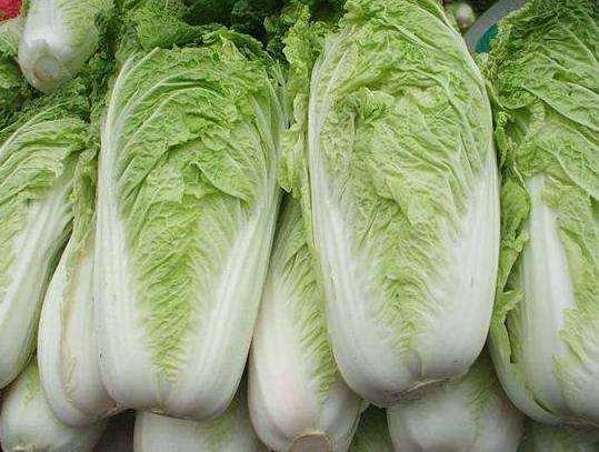 马上立秋了,菜园子该种植大白菜,大白菜育苗和直播有区别吗