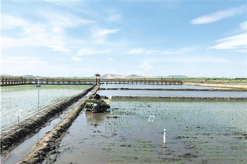 内蒙古科右中旗建起数字农场:草原稻米分外香