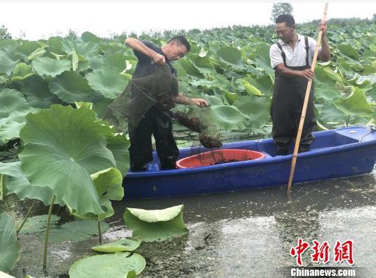 """江苏泗洪:""""家门口""""就业让村民产业红利"""