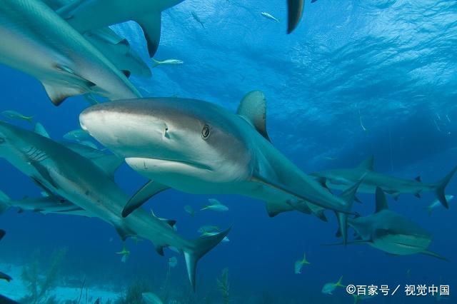 游泳能力差,却无生存危机,跟着宿主到处浪:这种懒鱼你听说过吗
