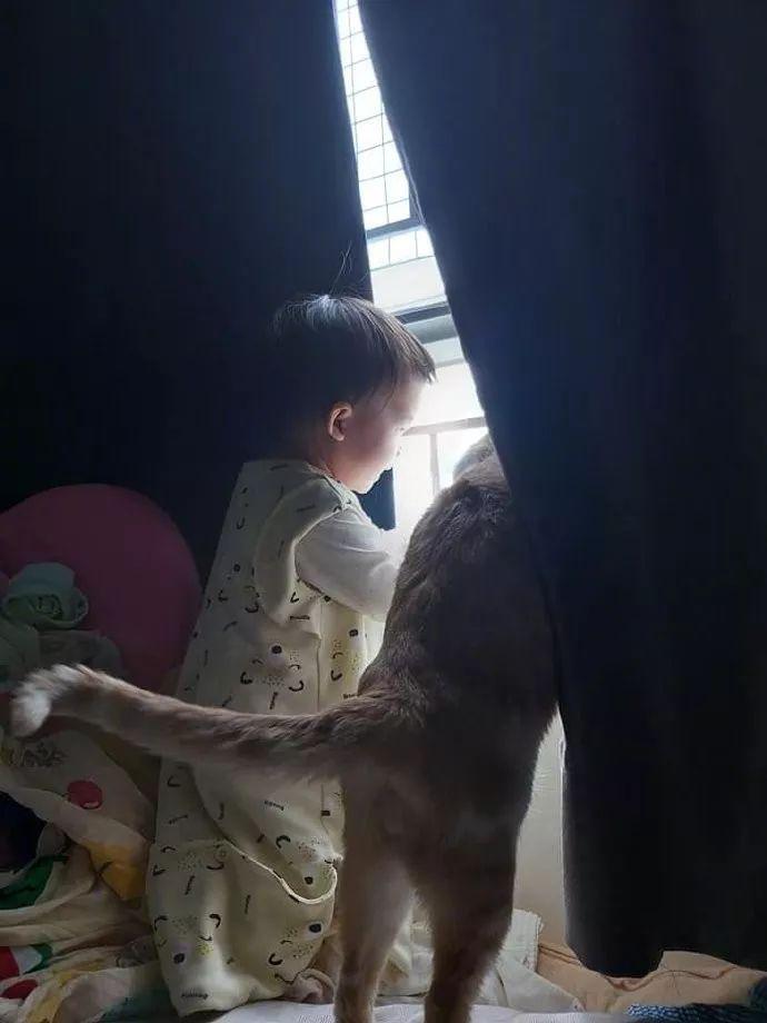 主人一开房间门看到宝宝和猫的这一幕,让人觉得好有爱!
