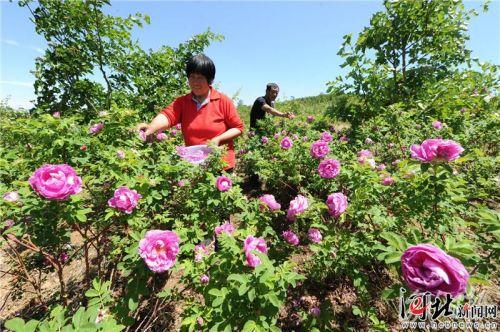 7大类24种优势特色产业引领河北现代农业发展