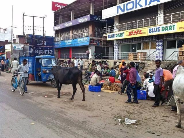 原创             中国游客到印度旅游,看见满大街的牛,心里纳闷:为什么没人吃?