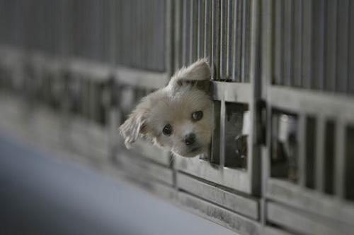 为什么街上的流浪狗多半是小型犬