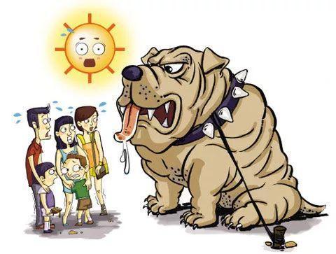 """高温烧烤天气下,上海出现多起""""狗咬孩子""""事件"""