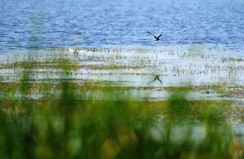 周末休闲好去处!广东拟两年内免费开放1000个自然保护地