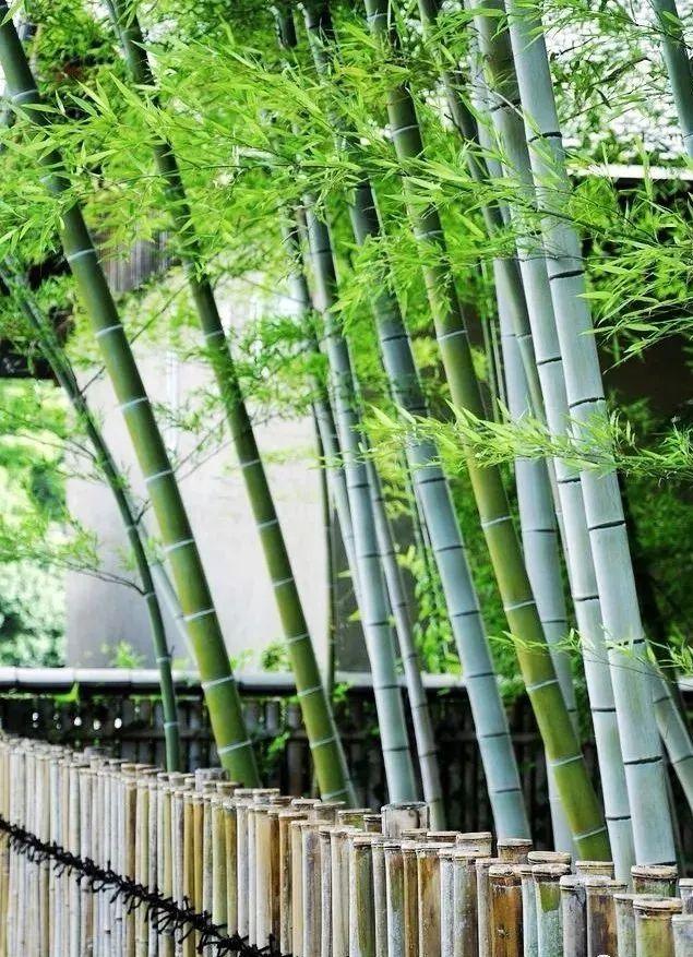 夏日,愿有一个院子,种上一片竹子