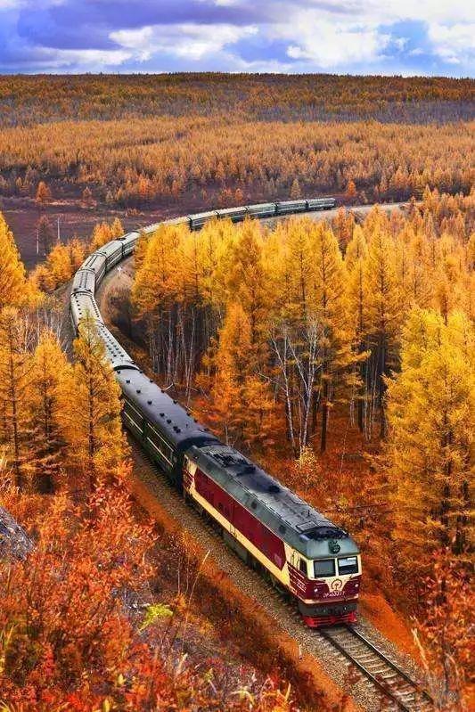 北纬50度,览初秋童话!大兴安岭,一夜间染成渐变秋