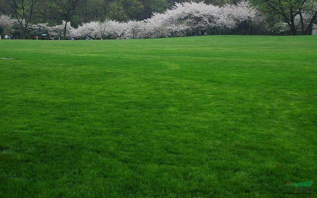 心理测试:哪一块草坪最让人舒服?测试你最近会遇上什么好运!