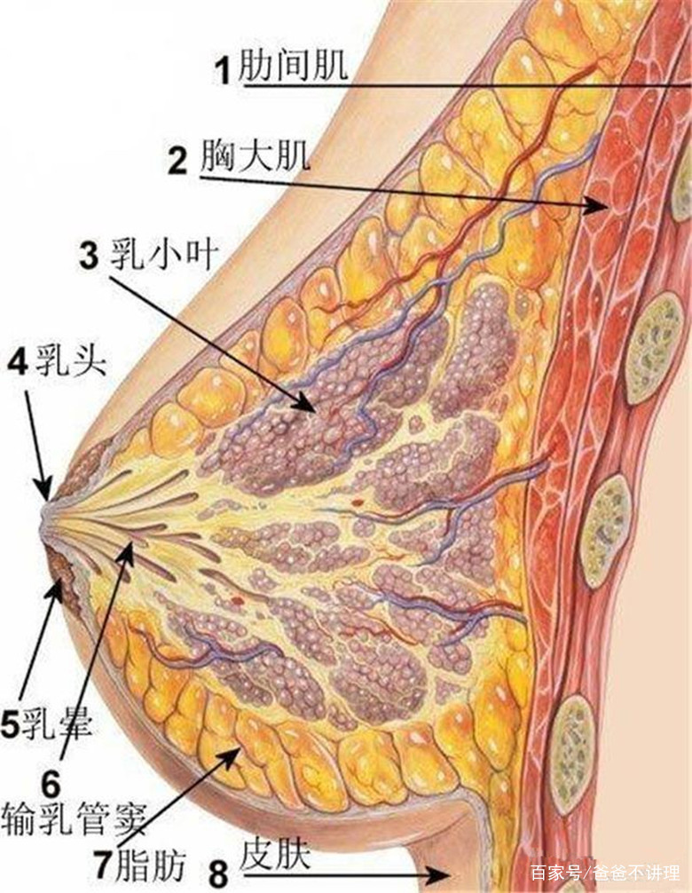 <b>生完孩子后乳房一定会下垂吗?</b>