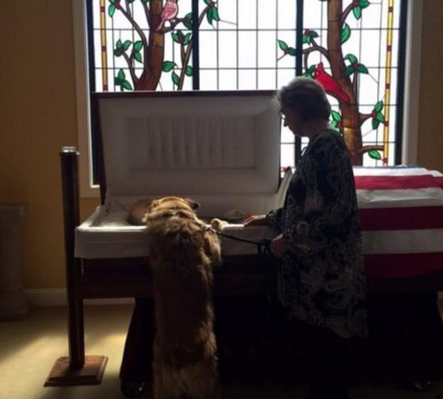 泪目!爱犬棺椁前努力踮脚,只为看76岁去世主人最后一眼