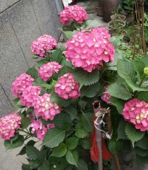 95c0bc0640da4335bee3b5d5a40ceae1.jpeg