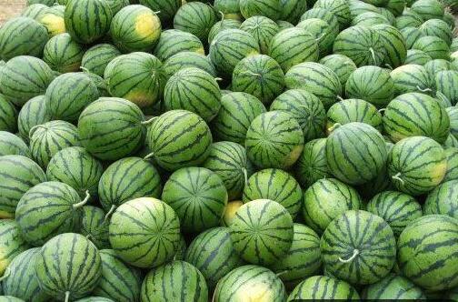 """想买到清甜的西瓜,只需看准""""这3点"""",保管一挑一个准"""