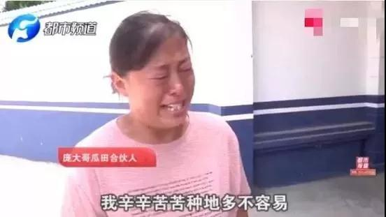 西瓜被偷还要倒赔小偷300元?瓜农委屈哭诉,警方最新回应…