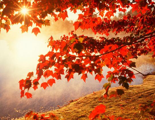 夏秋换季吃三种瓜菜,营养丰富,积极应对中暑和秋燥的双重打击