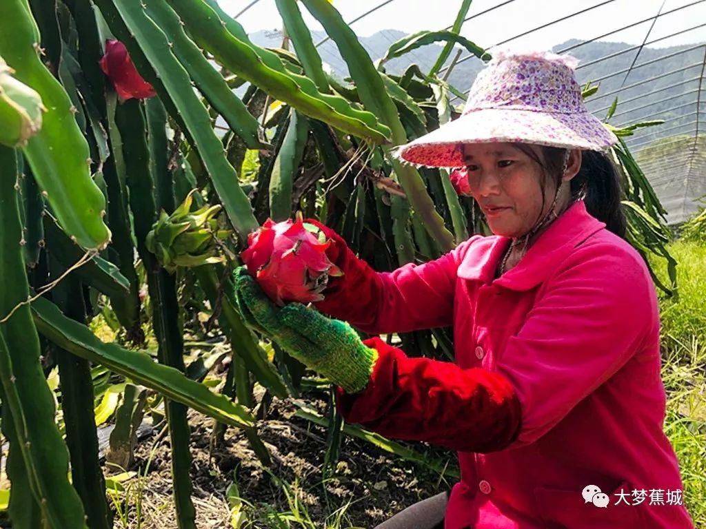 <b>助农 | 一波浪漫粉粉炸弹来袭赤溪千亩高优农业园,约起!</b>