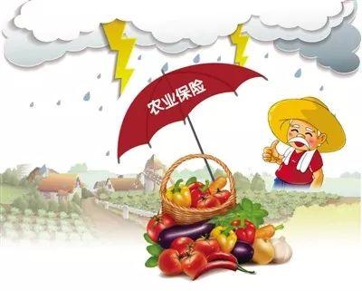 我省四县区开展政策性农业保险试点确保农民稳收增收