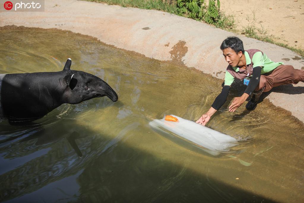 杭州动物园网购冰块为动物解暑