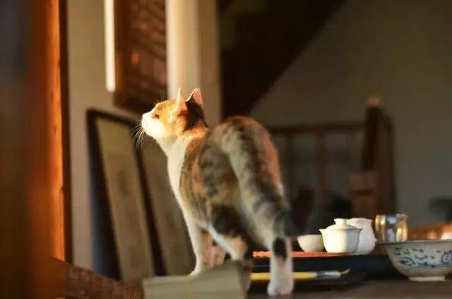 白茶、绿茶、红茶、普洱茶、乌龙茶该怎么洗茶?