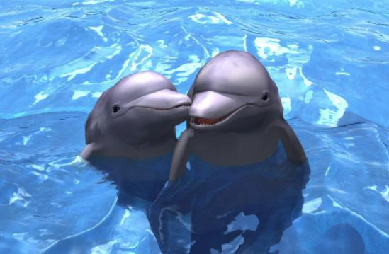 心理测试:3种不同海洋动物,测试下你更适合哪种途径暴富