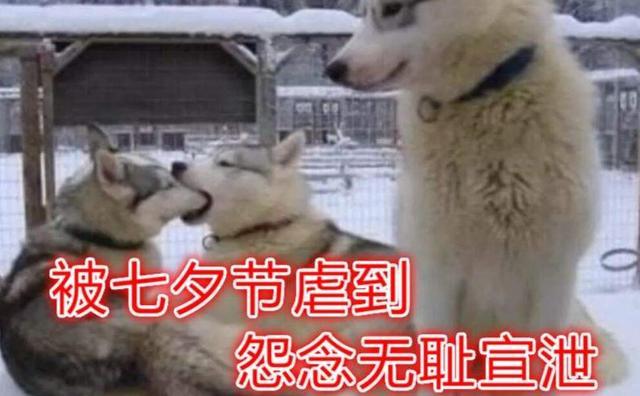 七夕虐狗节即将到来,不想在家吃狗粮,其实玩游戏也可以脱单