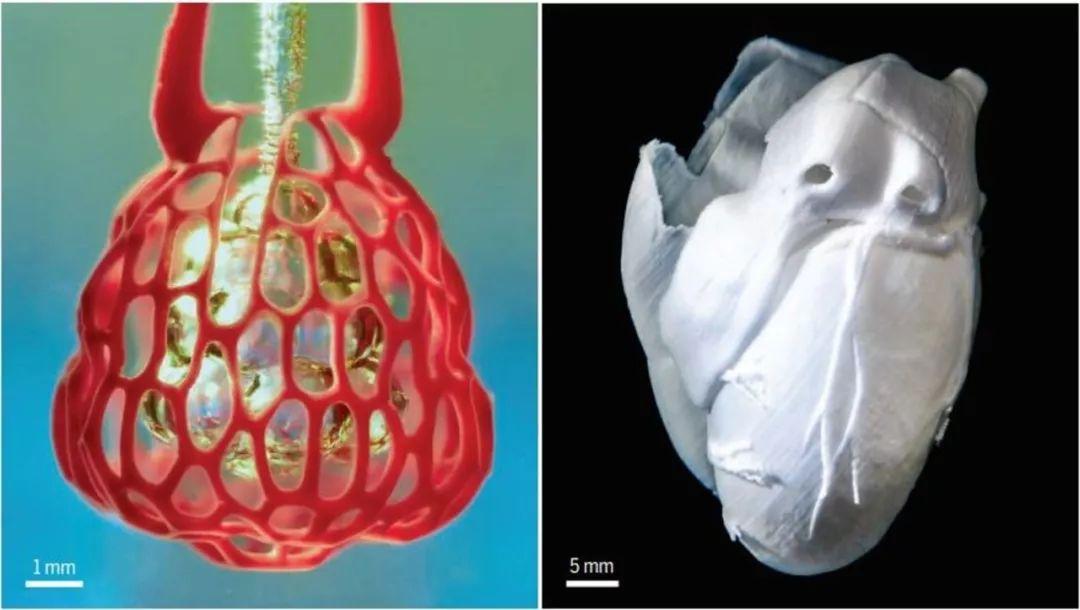 <b>人造器官再现奇迹,科学家打印出会跳动的心</b>