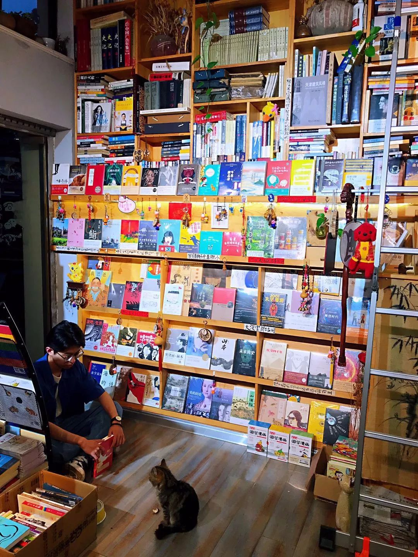 男子经营书店多年,生意好的原因却是因为一只收养的流浪猫