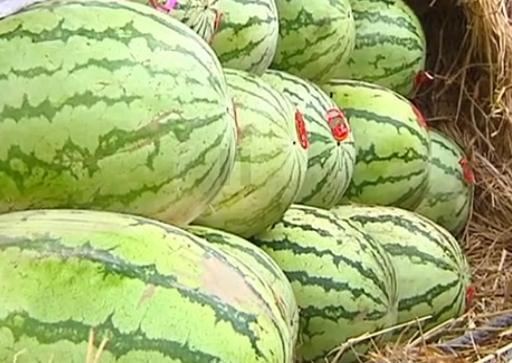 <b>10岁孩子吃西瓜,不料把西瓜籽呛进肺里,情况危急交警一路开道</b>
