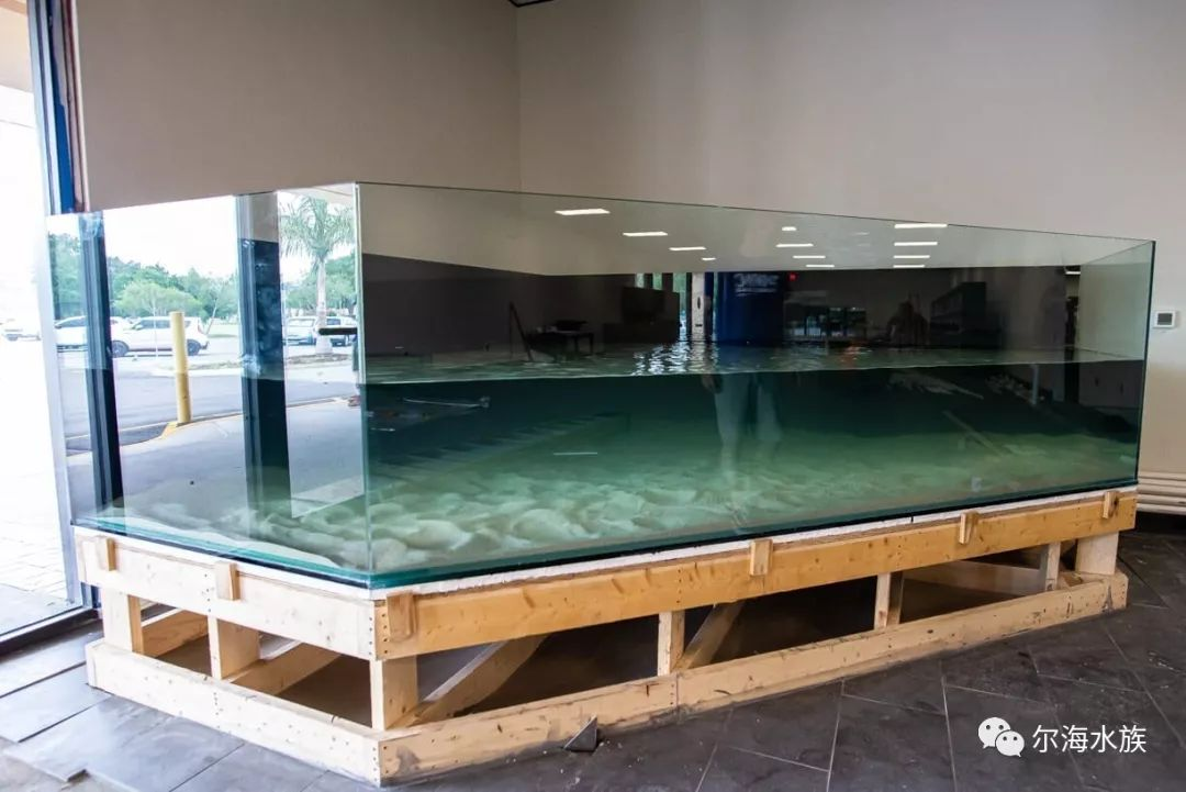 wwcvcom_海水店:美国环球珊瑚wwc的新店(三)
