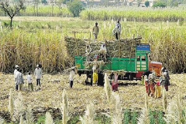 """<b>500万吨农产品堆积在港口,印度竟然想让中方做""""接盘侠""""?</b>"""