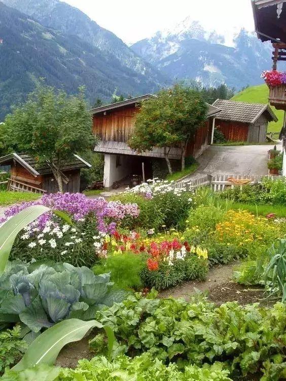 愿有一院,种菜!