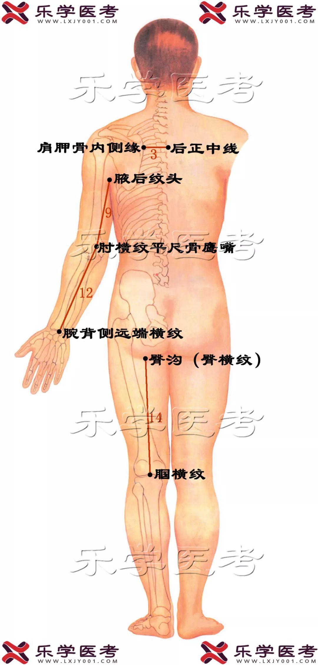 会宗_英文_拼音_会宗穴的位置、功效与作用、主治、... _医学百科