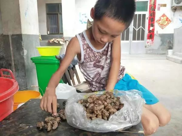 泪目!9岁男孩捡知了壳,为凑40万元救重病姐姐