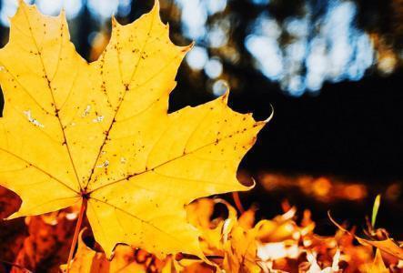 立秋后仍要注意防暑,喝2种汤、2种粥,防暑祛湿,老人的养生经验