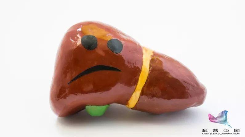 扎心了!为什么吃素还能得脂肪肝?原来脂肪肝怕的不只是脂肪