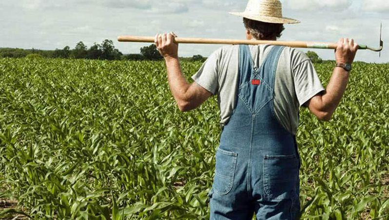 言而无信害人害己!中企暂停农产品采购责任在美方
