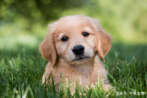 一只想复仇的狗子:我等了三年,就是要把失去的东西一定要拿回来