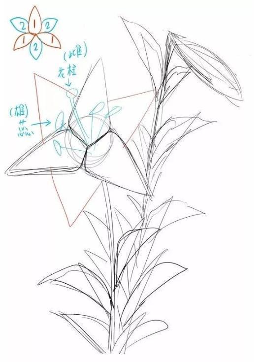 百合花简笔画步骤图解,手绘百合花的方法