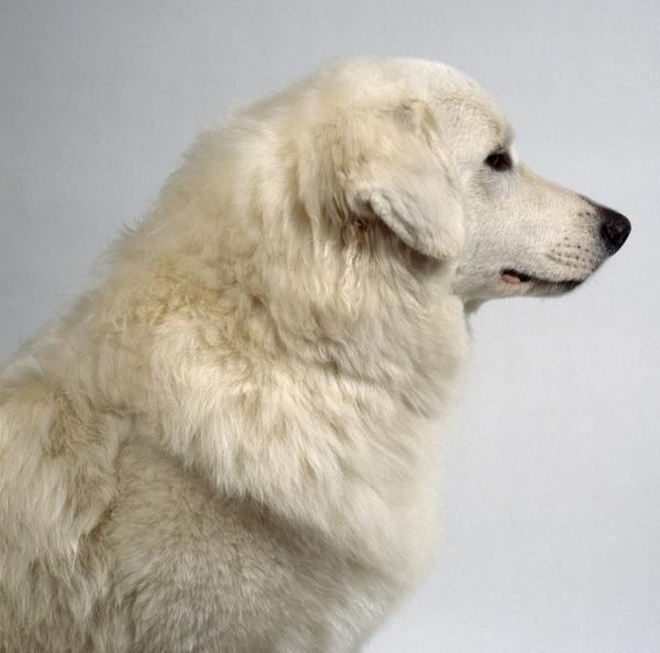 狗狗拉肚子的原因及治疗护理方法
